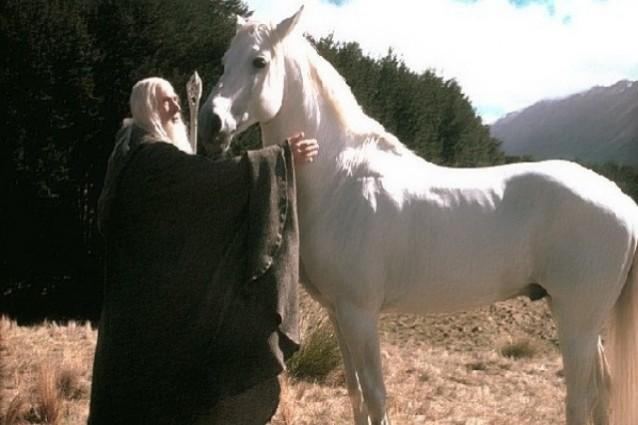 ombramanto-cavallo-signore-degli-anelli-638x425